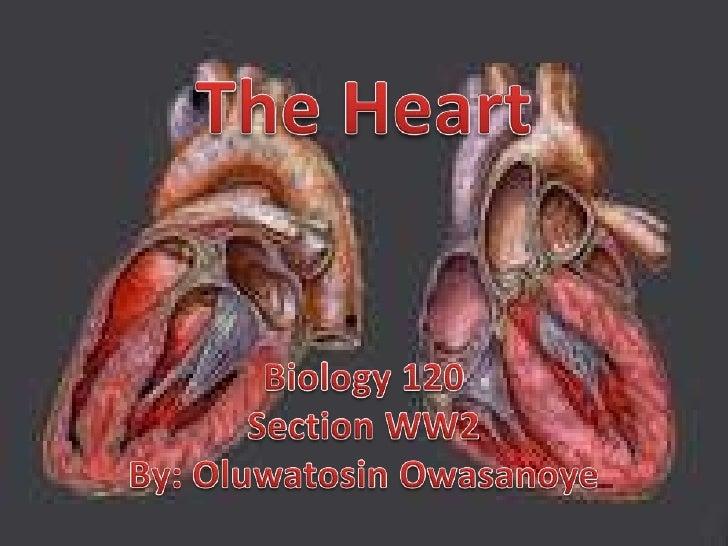The Heart<br />Biology 120<br />Section WW2<br />By: OluwatosinOwasanoye<br />