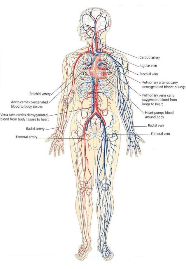 heart and blood vessel assessment (hearte) heart education awareness resource and training through e-learning.