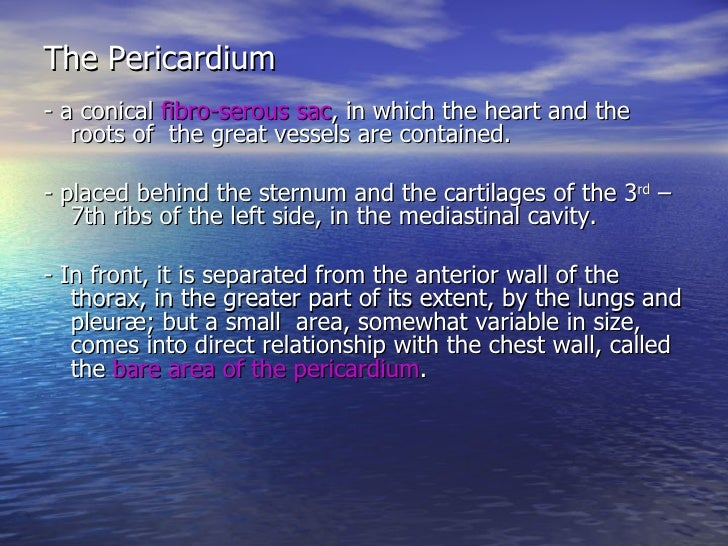 The Heart And Great Vessels Slide 3