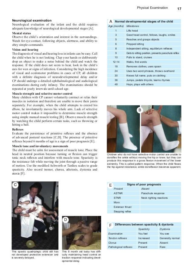 The Cerebrum Manual Guide