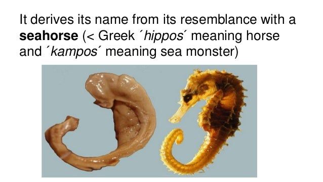 the parts of the hippocampus that helps form new memories The more gaba you have in your hippocampus how your brain helps you stop thinking you'll ever be able to scrub unwanted thoughts from your memory.