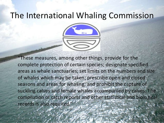 the objectives and milestones of the international whaling convention International court of justice reports of judgments, advisory opinions and orders whaling origins of the convention — schedule to the convention — international whaling commission — the scientific committee and its role objective character of the standard of review — the court.