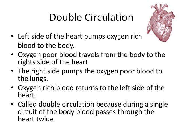 Double Circulation  • Left side of the heart pumps oxygen rich  blood to the body.  • Oxygen poor blood travels from the b...