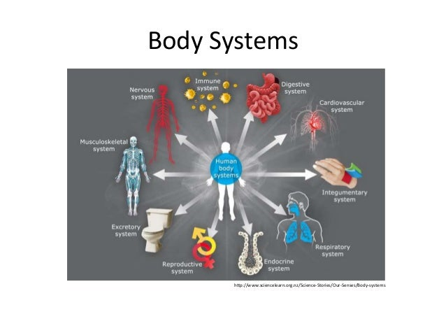 Body Systems  http://www.sciencelearn.org.nz/Science-Stories/Our-Senses/Body-systems