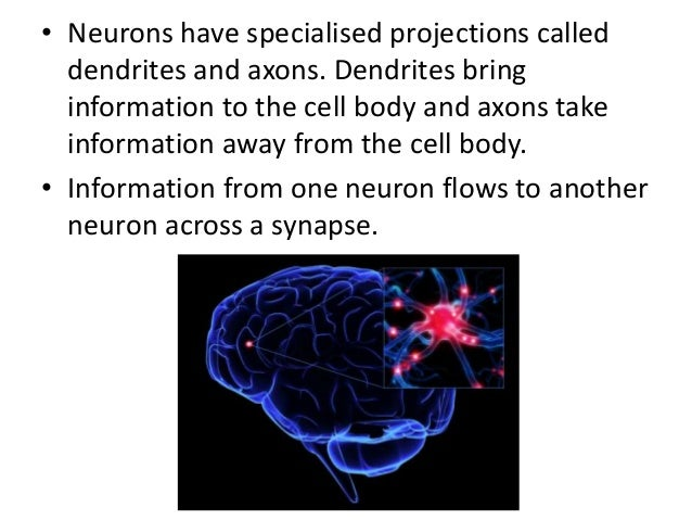 http://en.wikipedia.org/wiki/File:Complete_neuron_cell_diagram_en.svg