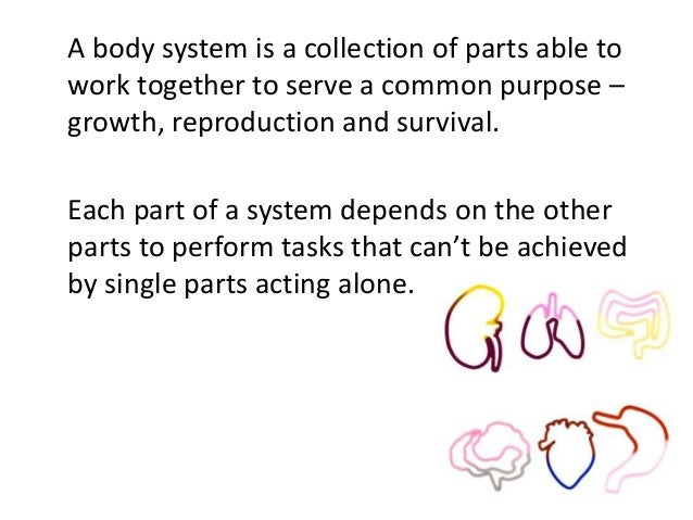 A body system is a collection of parts able to  work together to serve a common purpose –  growth, reproduction and surviv...
