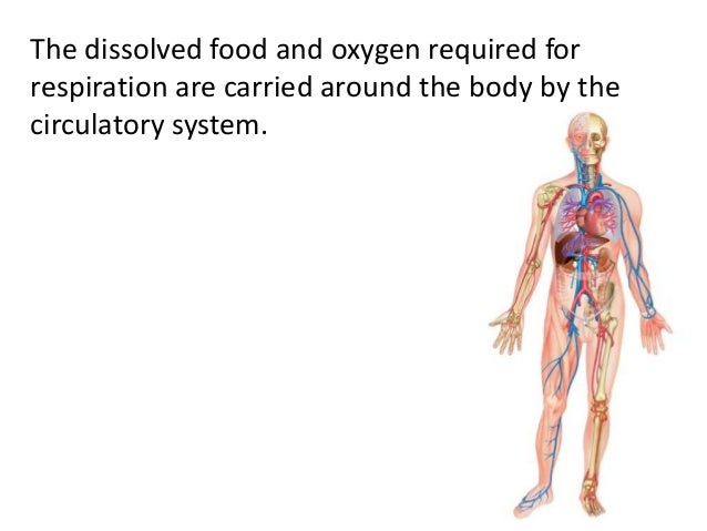 The dissolved food and oxygen required for  respiration are carried around the body by the  circulatory system.