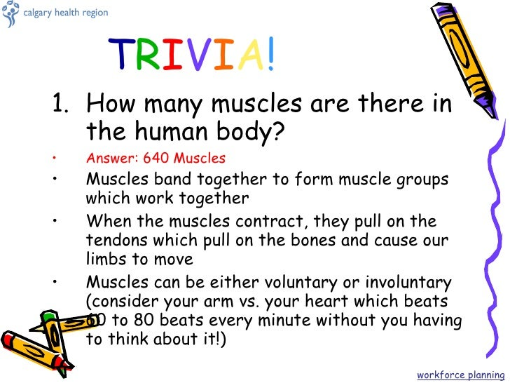 the human body, Muscles