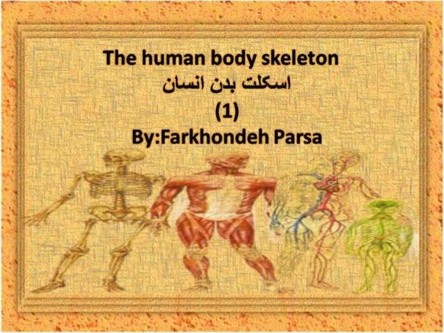 The human body skeleton -1
