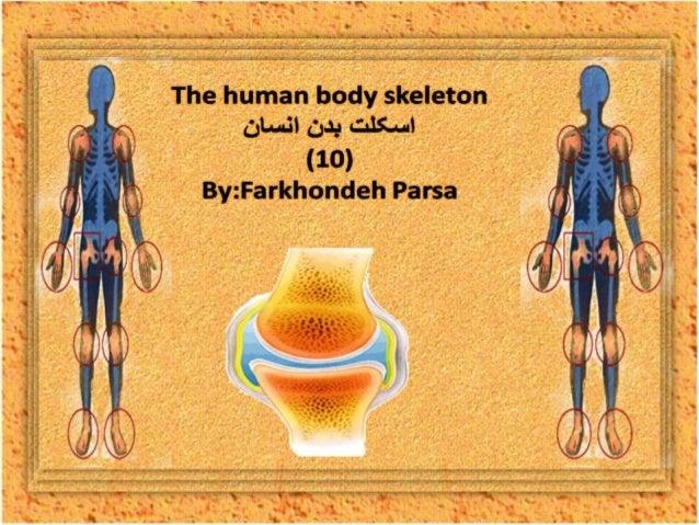 The human body skeleton- 10