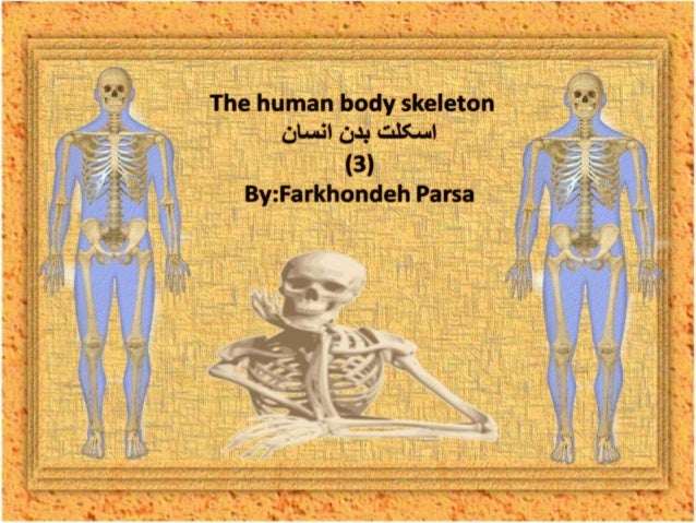 The human body skeleton- 3