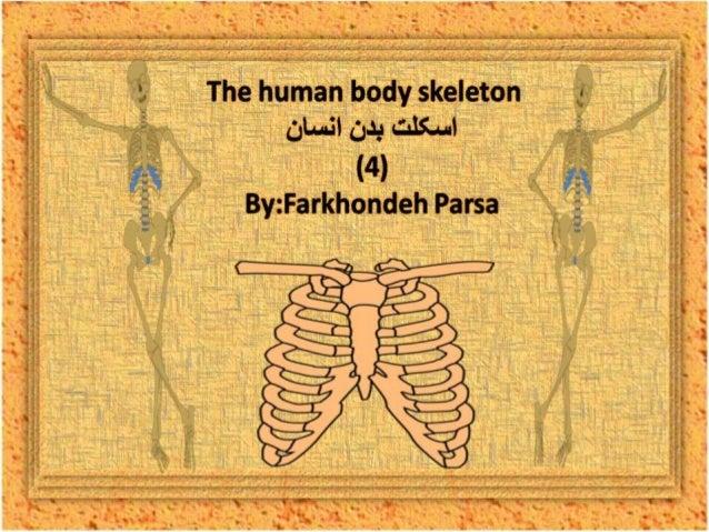 The human body skeleton -4