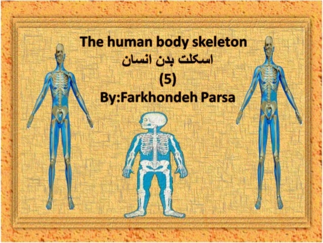 The human body skeleton- 5
