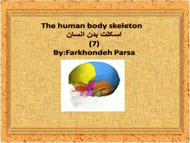 The human body skeleton- 7