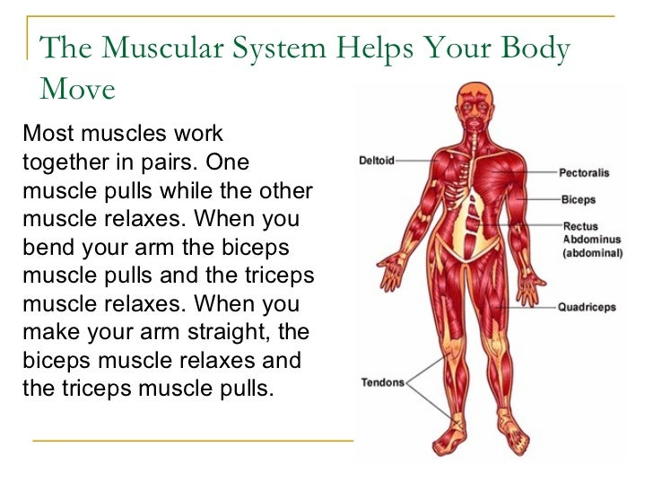 The Human Body Systems1