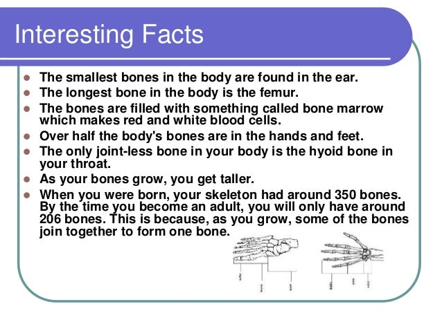 body systems facts – applecool, Muscles