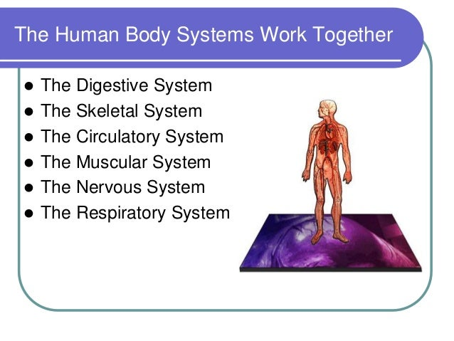 How Your Body Systems are Connected - Revere Health