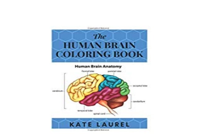 EBOOK_PAPERBACK The Human Brain Coloring Book Human Brain Students Se…