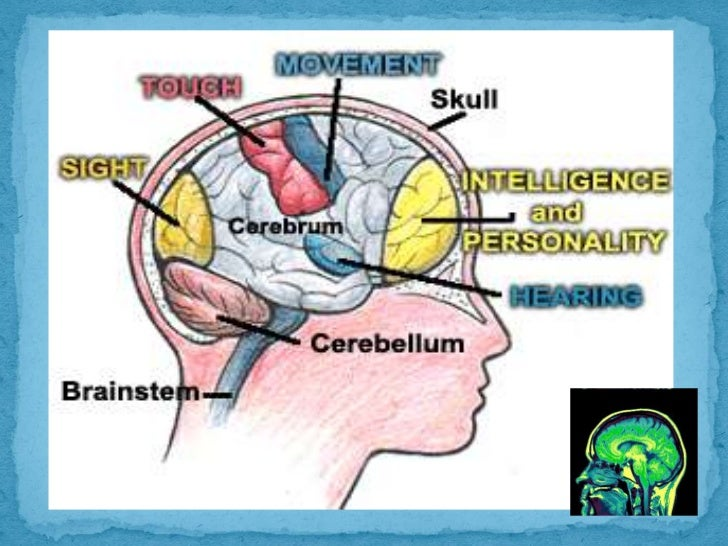 the human body brain essays Essays glossary i would even say, regarding the low factor of utilisation of the brain's capacities human beings display nowadays thinking as such (hyponoesis) is independent of the body or the brain.