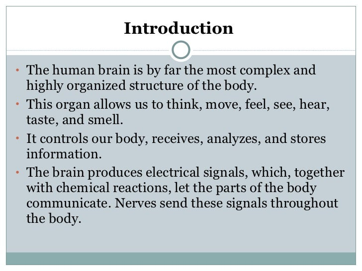 Essay on the human brain