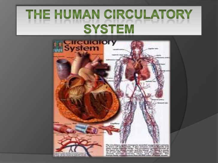 -CIRCULATORY SYSTEM-      -THE HEART-      -THE BLOOD-  -THE BLOOD VESSELS-  -THE BLOOD CIRCUIT--THE LYMPHATIC SYSTEM-
