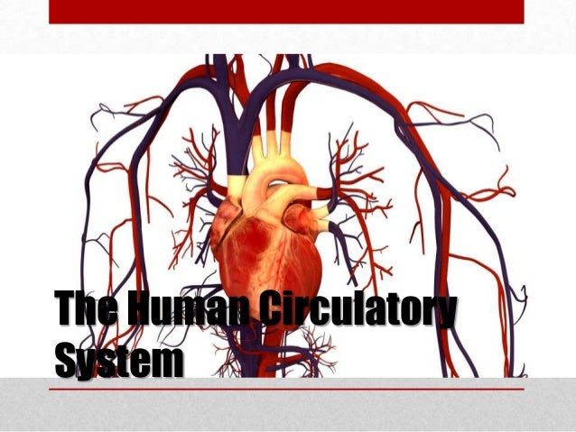 The human circulatory system for Home circulation system