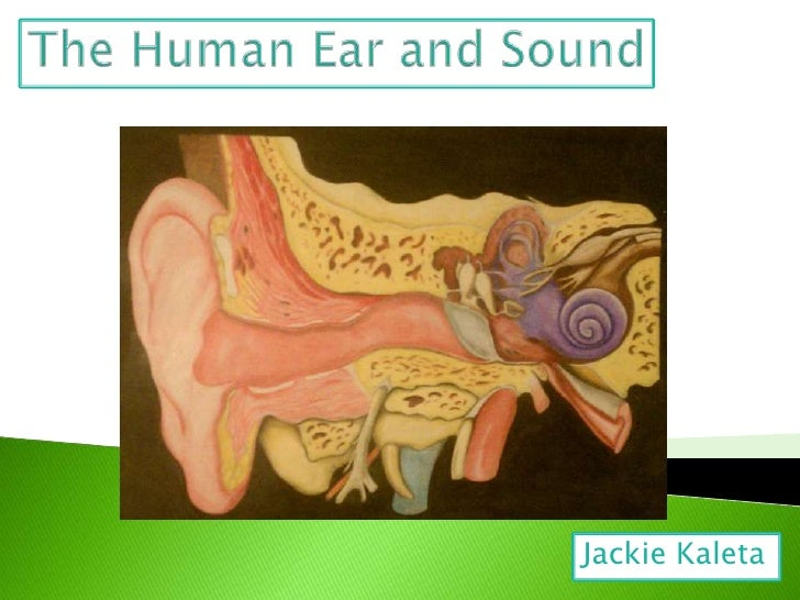 The Human Ear and Sound<br />Jackie Kaleta<br />