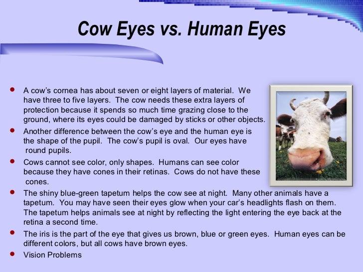 cow eye diagram