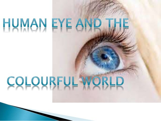 The human eye is an  organ that reacts to light  and has several purposes.  As a sense organ, the  mammalianeye allows vis...