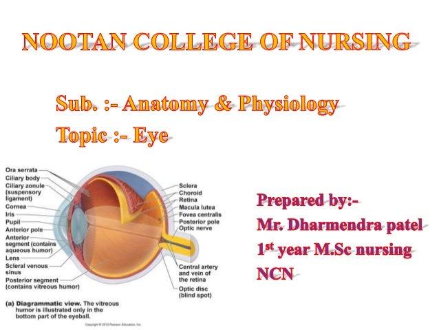The Human Eye Amatomy