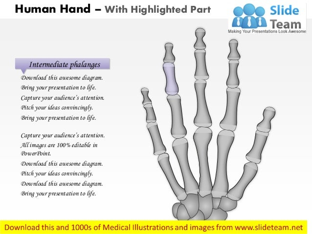 the human hand medical images for power point 4 638?cb=1405467399 the human hand medical images for power point