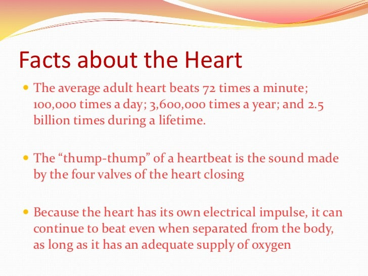 facts about human heart Related post to amazing facts about human br on fun facts about the human body your br ventral view of human heart anatomy the vi on human heart.
