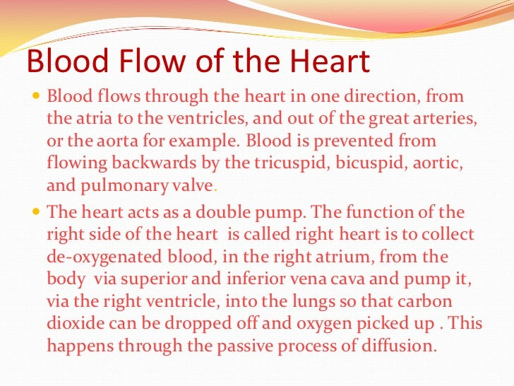 The human heart blood flow of the heart blood flows through ccuart