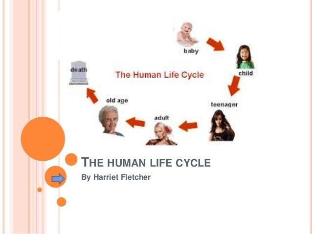 The human life cycle the human life cycle by harriet fletcher sciox Choice Image