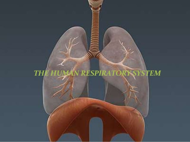 The Human Respiratory System Ppt.1pptx