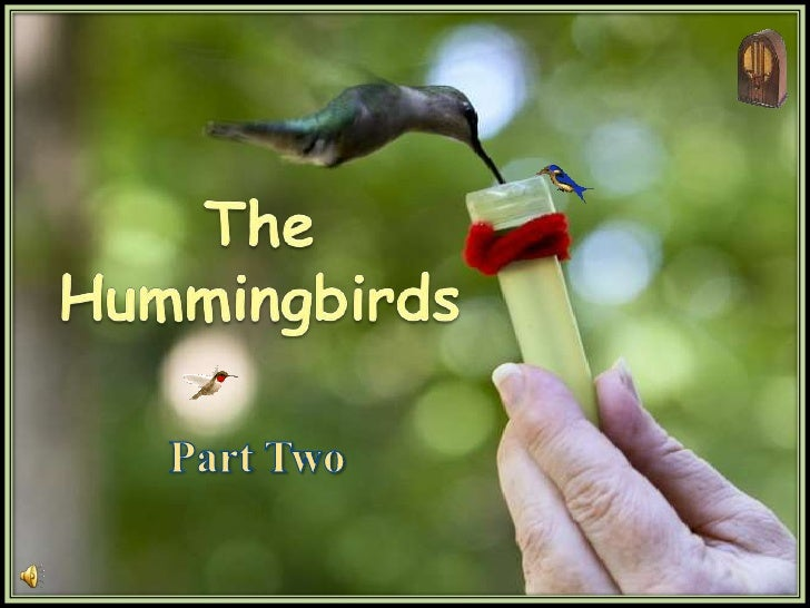 The <br />Hummingbirds<br />Part Two<br />