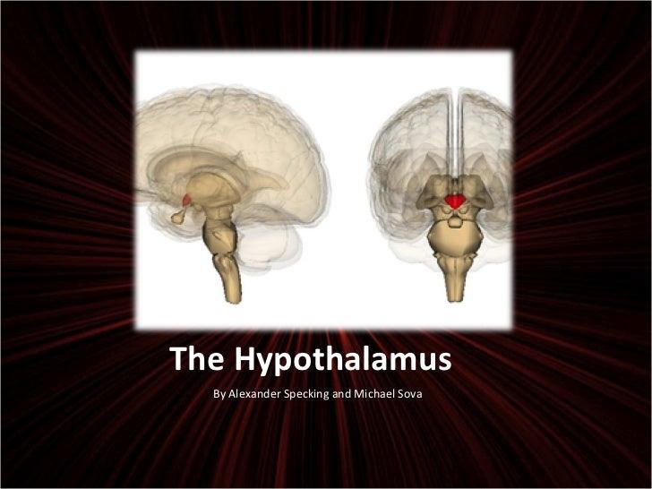 The Hypothalamus <ul><li>By Alexander Specking and Michael Sova </li></ul>
