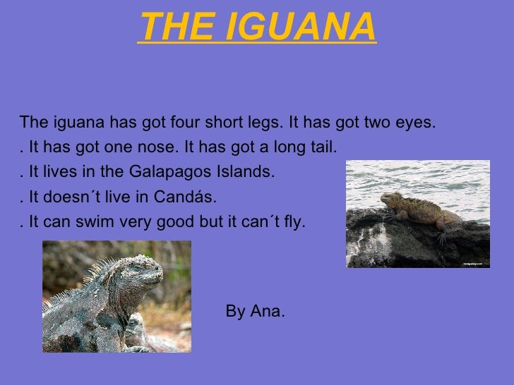 THE IGUANA <ul><li>The iguana has got four short legs. It has got two eyes. </li></ul><ul><li>. It has got one nose. It ha...
