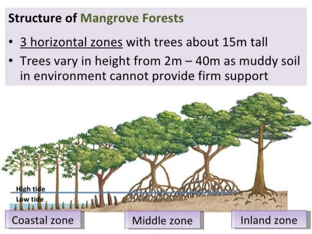characteristics and importance of mangrove ecosystem Mangroves are not only considered an important source of food, fuelwood, timber  and medicine for  characteristics of mangrove ecosystems of the maldives.