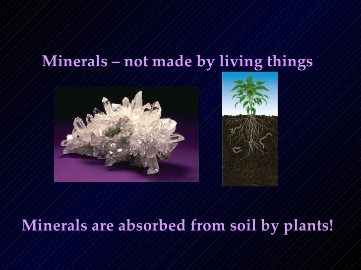 The importance of nutrients for Minerals present in soil