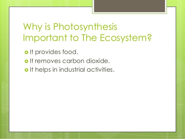 three importance of photosynthesis