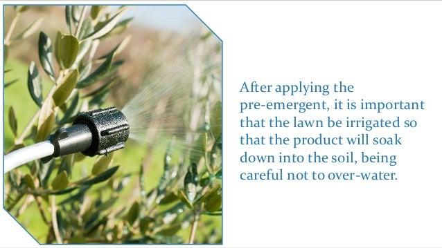 summary 28 a preemergent spray is an herbicidal treatment