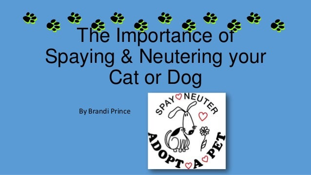 The Importance ofSpaying & Neutering yourCat or DogBy Brandi Prince