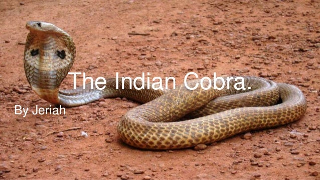 The Indian Cobra. By Jeriah
