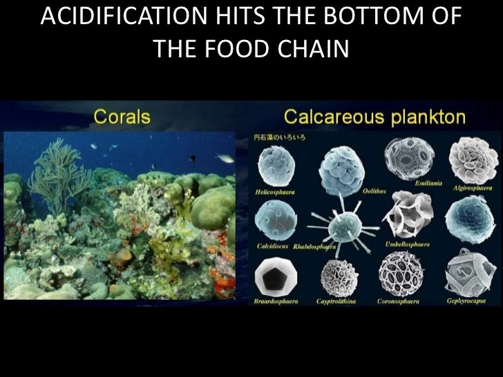 ACIDIFICATION HITS THE BOTTOM OF THE FOOD CHAIN<br />