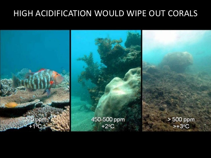 HIGH ACIDIFICATION WOULD WIPE OUT CORALS<br />
