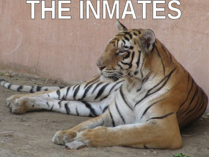 THE INMATES