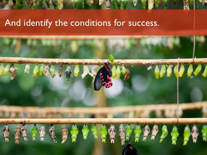 And identify the conditions for success.Luminary Labs                              33