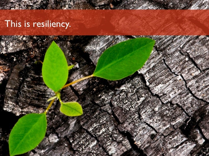 This is resiliency.Luminary Labs         36