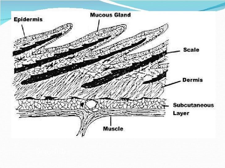 Medical Definition of Scale, skin - MedicineNet